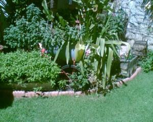 מדשאה ירוקה בקיץ