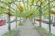רחוב עם הצללה טבעית