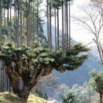 שיטת הדאיסוגי למניעת כריתת עצים daisugi