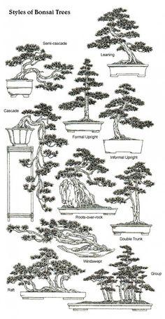תרשים לימודי לגידול עצים בשיטת הדאיסוגי
